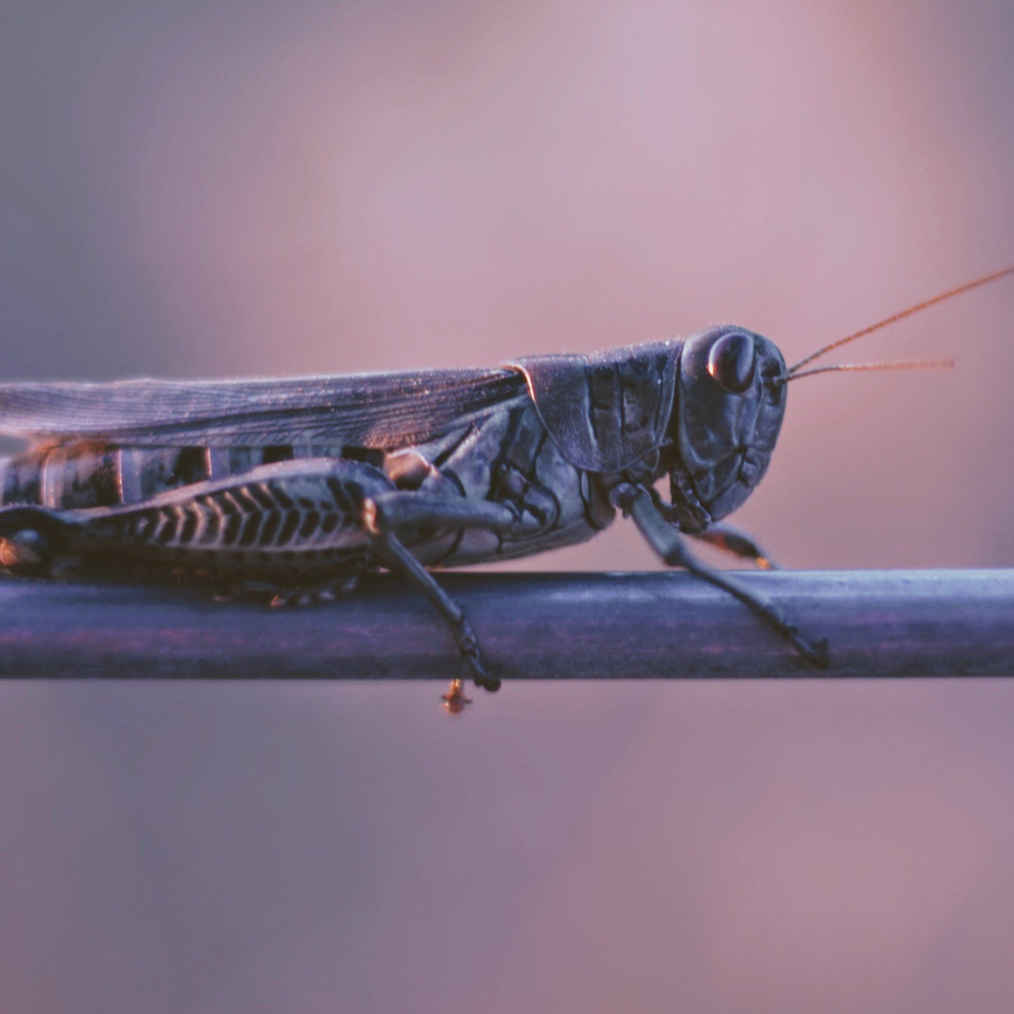 PLAGUE OF LOCUSTS HITS MIDDLE EAST RIGHT   Intercessors ...